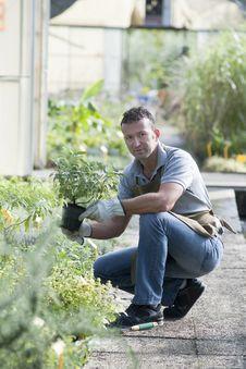 Gardener At Work Stock Photos