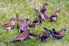 Free Sparrow Stock Images - 17217834
