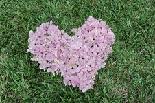 Free Flower Heart Stock Image - 17218441