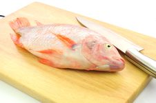 Free Red Tilapia On Chopping Block . Royalty Free Stock Images - 17218669