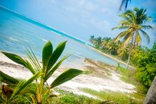 Free Picture Tropical Royalty Free Stock Photo - 17219475