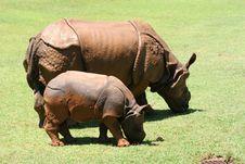 Ceratotherium Simum African Rhinocerus Royalty Free Stock Photos