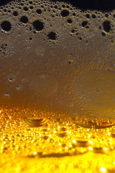 Free Light Beer. Royalty Free Stock Photos - 17219818