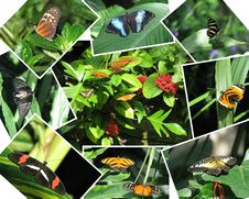 Free Collection Of Butterfly Photographs Stock Photo - 17220010