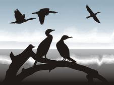 Free Cormorants  On Lake Shore Royalty Free Stock Image - 17221436