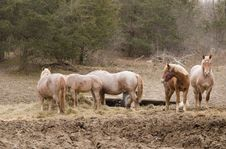 Free Horses Feeding Stock Photo - 17221760