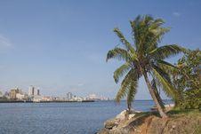 Free Coconot Tree In Havana City Bay Entrance Stock Photo - 17223050