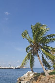 Free Coconot Tree In Havana City Bay Entrance (vert) Stock Photo - 17223310