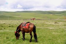 Free The Grasslands Horse Stock Image - 17226341