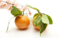Free Tangerines And Leaves Royalty Free Stock Image - 17226456