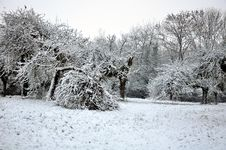 Free Apple Trees  In Snow Royalty Free Stock Image - 17227086