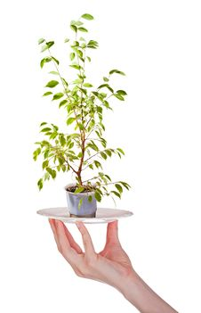 Free Small Tree On Plate In Hand Stock Photos - 17228903