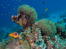 Free Underwater Tropical Reef Scene Royalty Free Stock Images - 17229079