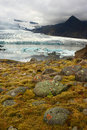 Free Flora Under Melting Glacier Stock Photo - 17236690
