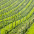 Free Vineyard Stock Photos - 17237053