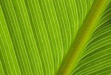 Free Leaf Texture Stock Image - 17230461