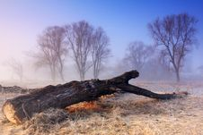 Free And Dead Trees Have Dreams Too Stock Photos - 17230943