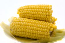 Free Boiled Corn Stock Photography - 17231322