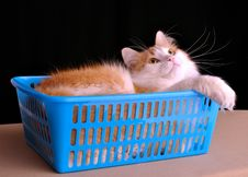 Free Cat In The Box Stock Images - 17231374