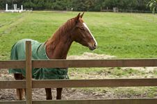 Free Horse Behind Wooden Fence Royalty Free Stock Photography - 17233467