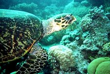 Free Turtle Stock Photography - 17233682