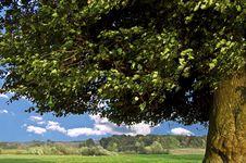 Free Old Tree Stock Photos - 17235453