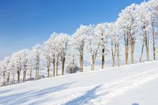 Free Winter Landscape Royalty Free Stock Images - 17236409