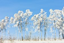 Free Winter Landscape Royalty Free Stock Images - 17236419