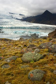 Flora Under Melting Glacier Stock Photo