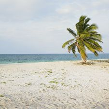 Free Beach Of Cayo Sabinal Stock Photography - 17236912