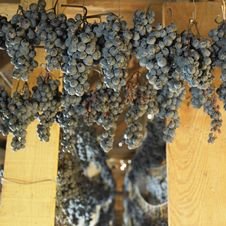 Drying Grapes Royalty Free Stock Images