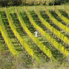 Free Vineyards, Czech Republic Stock Photos - 17237603