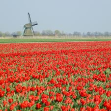 Free Windmill With Tulip Field Royalty Free Stock Images - 17237959