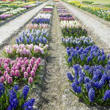 Free Garden Stock Photo - 17237990