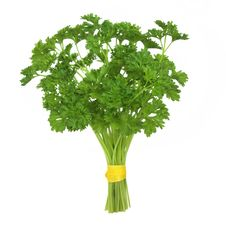 Free Parsley Herb Plant Stock Photos - 17239383