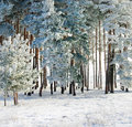 Free Frozen Pine Stock Images - 17247574