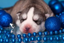 Free Puppy Royalty Free Stock Image - 17241016