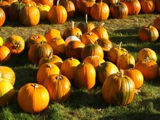 Pretty Pumpkins Royalty Free Stock Image
