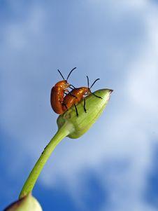 Free Nude Bug Stock Image - 17243031