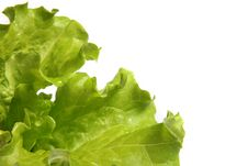 Free Fresh Salad Lettuce Royalty Free Stock Photos - 17245688