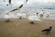 Free Birds On The Beach Royalty Free Stock Photography - 17246267