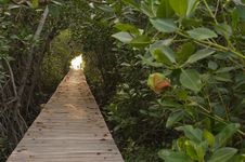 Wood Bridge In Mangrove Forest Stock Photo