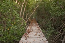 Wood Bridge In Mangrove Forest Royalty Free Stock Photo