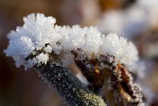 Free Frozen Twigs Stock Photos - 17247653