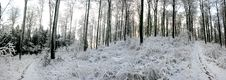 Free Winter Panorama Royalty Free Stock Images - 17247879