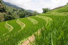 Free Rice Terrace Royalty Free Stock Photo - 17248155