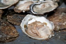 Free Fresh Oysters. Royalty Free Stock Photo - 17248165