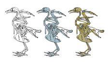 Free Skeleton Of A Bird Stock Photos - 17248933