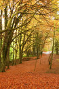 Free Autumn Forest Pathway. Stock Photos - 17250353