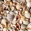 Free Seashell Background Stock Photography - 17251102